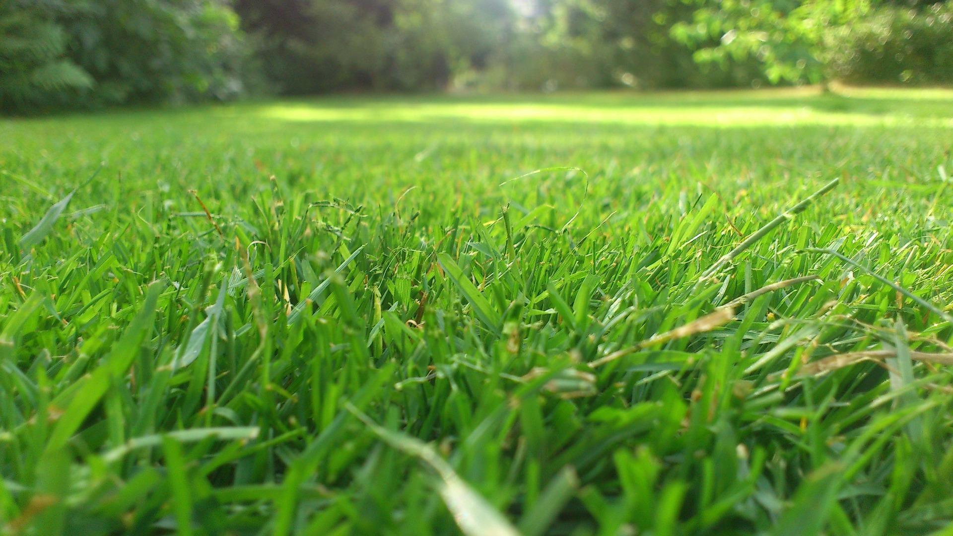 Grass Cutting John P Langan